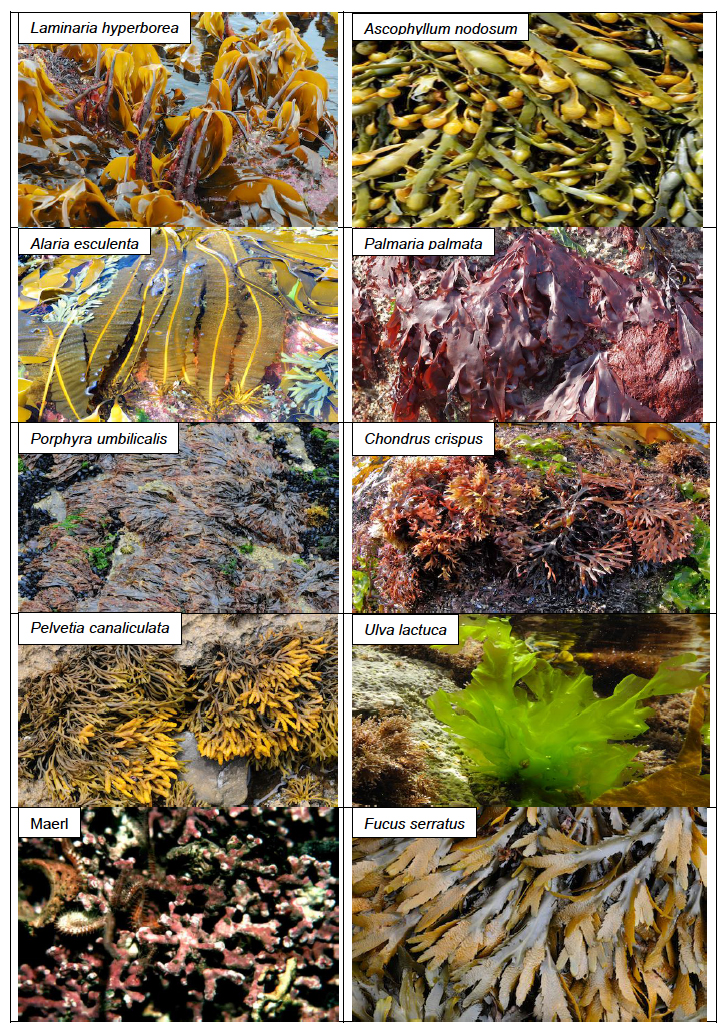 Figure 1: Examples of seaweed