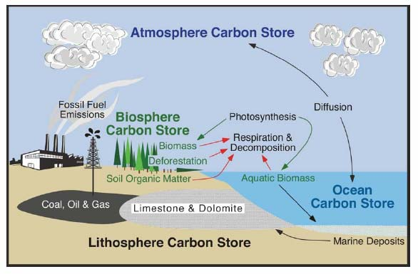Figure 5.1 The Carbon Cycle (Dr. Michael Pidwirny, Associate Professor University of British Columbia Okanagan)