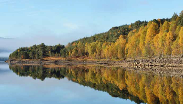 Caledonian pine woodland at Glen Affric National Nature Reserve. ©Lorne Gill/SNH